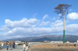 奇蹟一本松(陸前高田市)