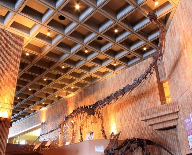 岩手県立博物館にあるモシリュウの復元骨格