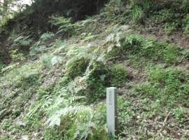 樋口沢ゴトランド紀化石産地(大船渡市)