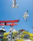 가부시마 섬