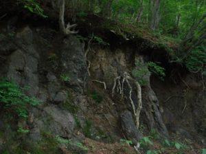 小本の植物化石産地