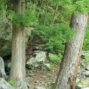 薬師川渓流の古生界